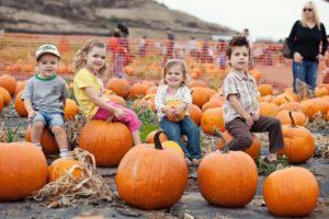 Pumpkin patch - fundraising for church