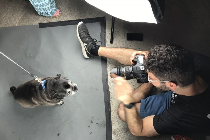 dog photography - humane society fundraising ideas