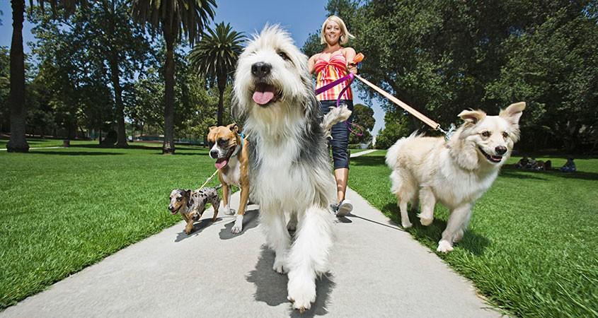 animal rescue fundraising ideas