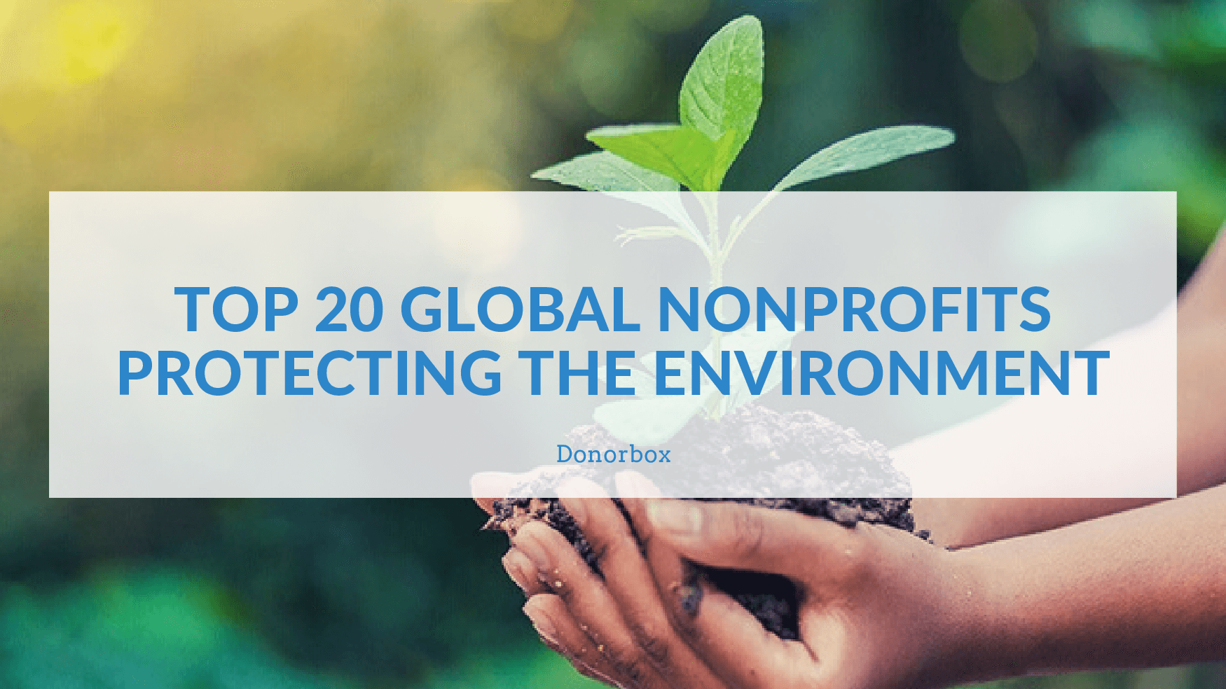 Top 20 Global Nonprofits Protecting the Environment