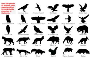 birds - social bookmarking