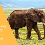 Fundraising Ideas for Wildlife Charities