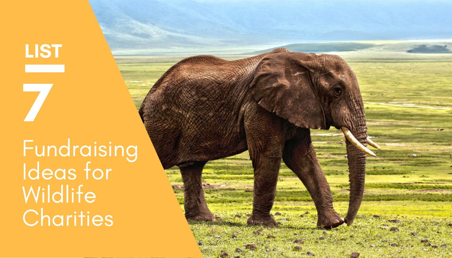 7 Fundraising Ideas For Wildlife Charities That Raise Awareness
