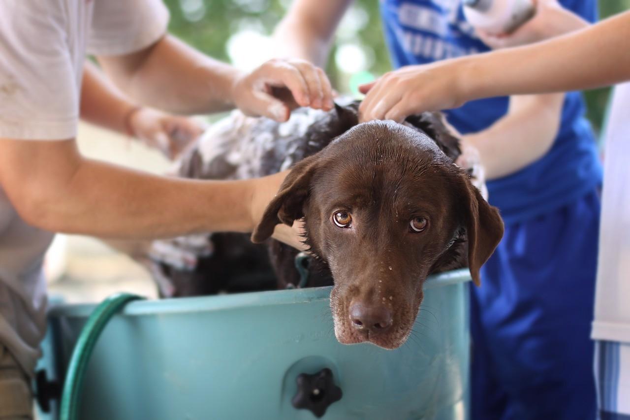 dog wash 4125187 1280