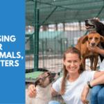 animal shelter fundraising ideas