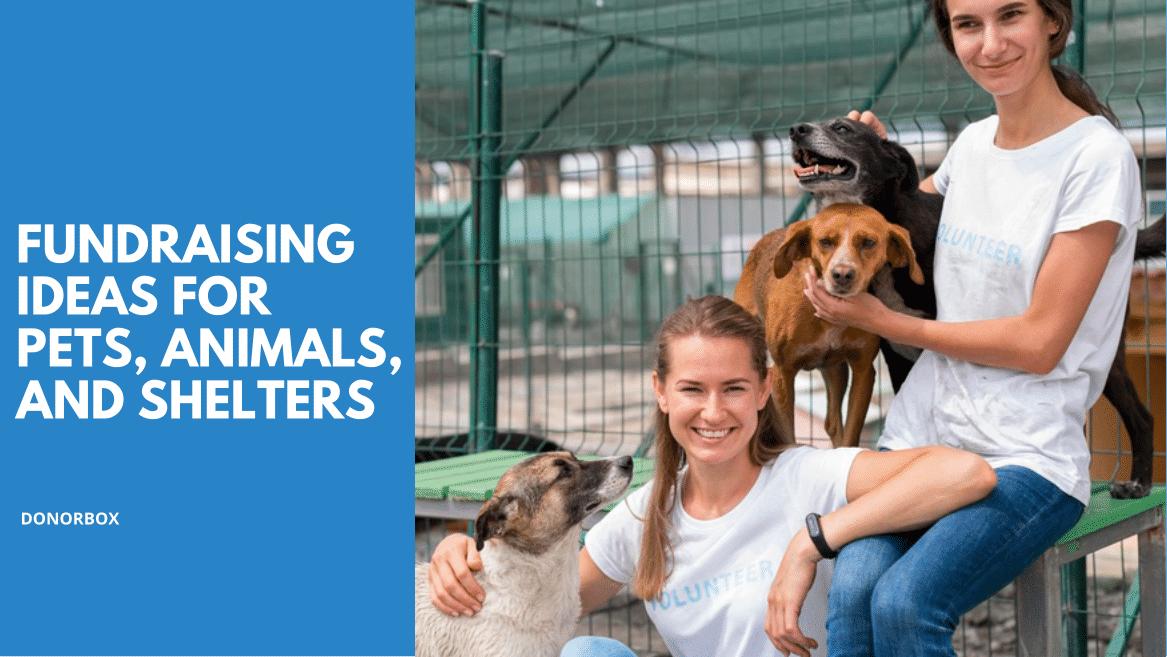 17 Effective Animal Shelter Fundraising Ideas