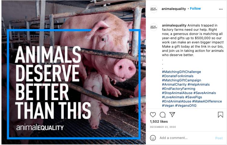 animal shelter fundraising slogans
