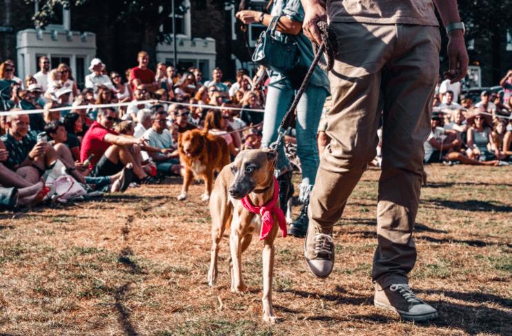 dog fundraising ideas