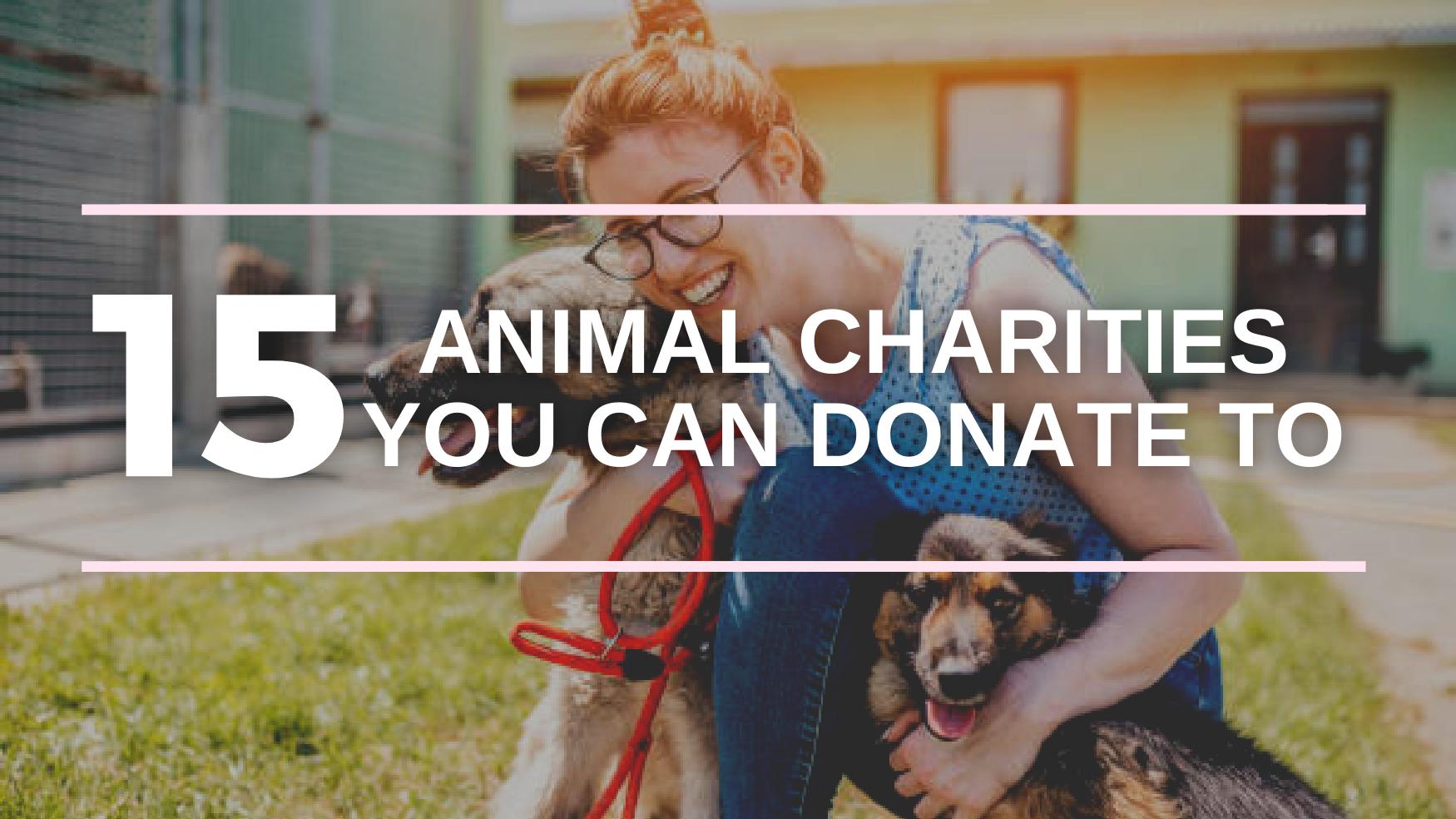 best animal charities